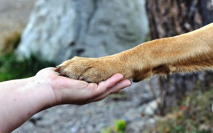 gestos de los perros