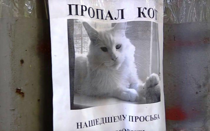 mirada-gato