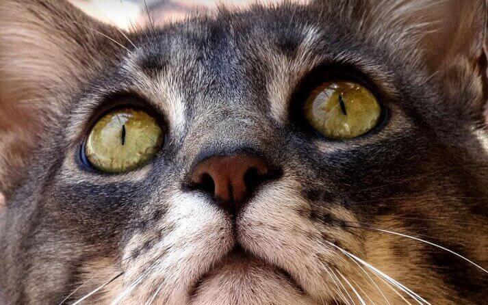ojos gato que comunican