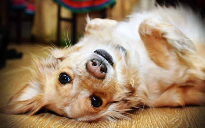 perro-gesto