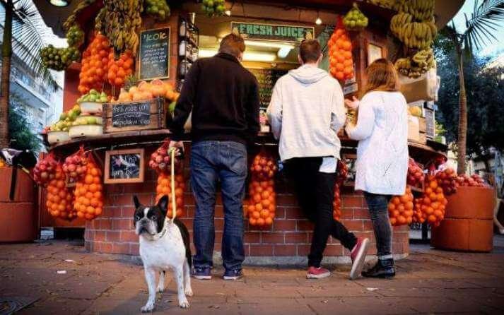 Las frutas que son más importantes para los perros.