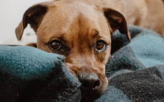 frío y cambio de tiempo en los perros