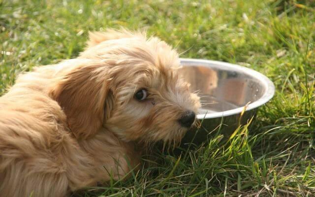 Comidas para perros en verano.