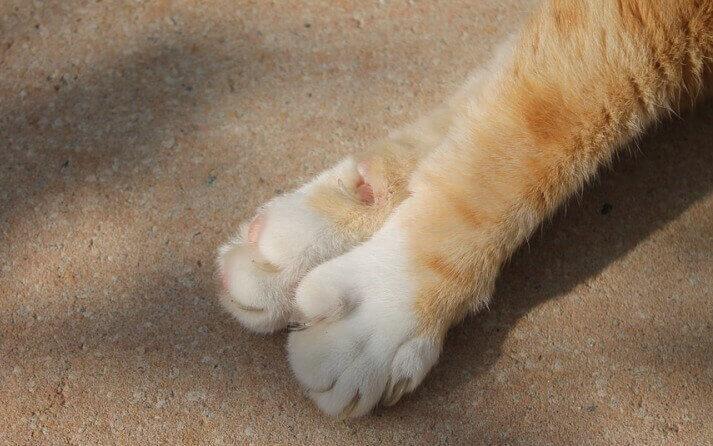 pasos cortar unas gatos