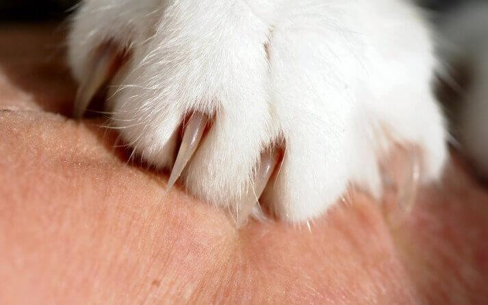 pasos para cortar unas gatos