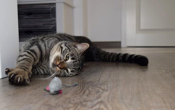 propiedades unas gatos