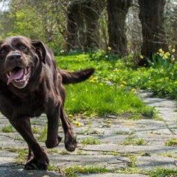 que hacer con un perro hiperactiivo