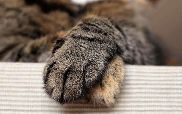 unas gatos