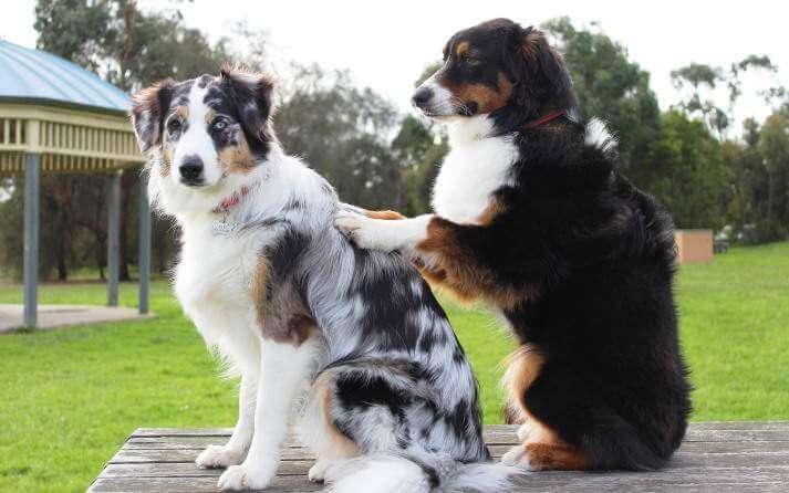 trastornos en perros