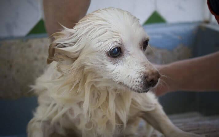 bañar a perros