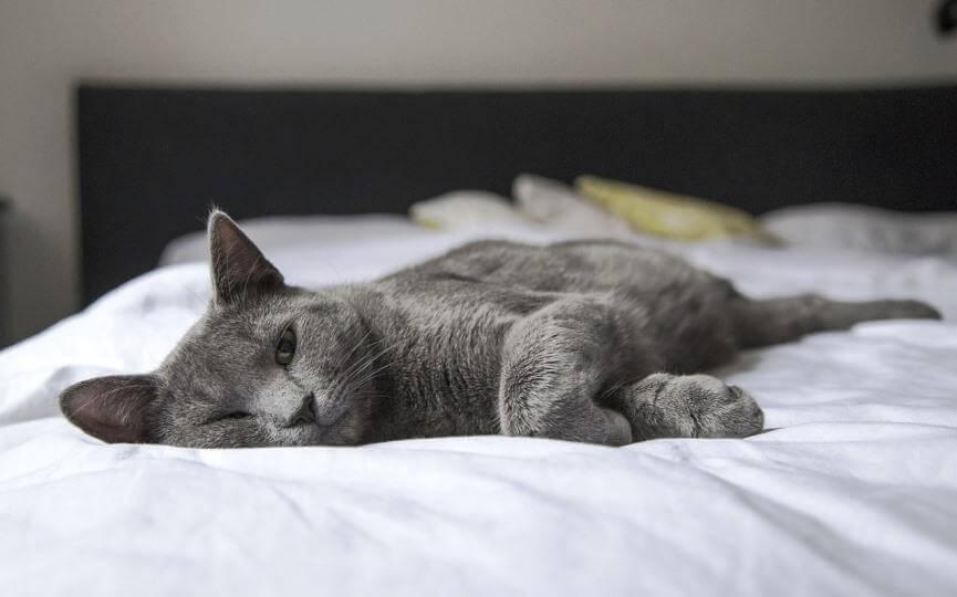 Gato triste en una cama