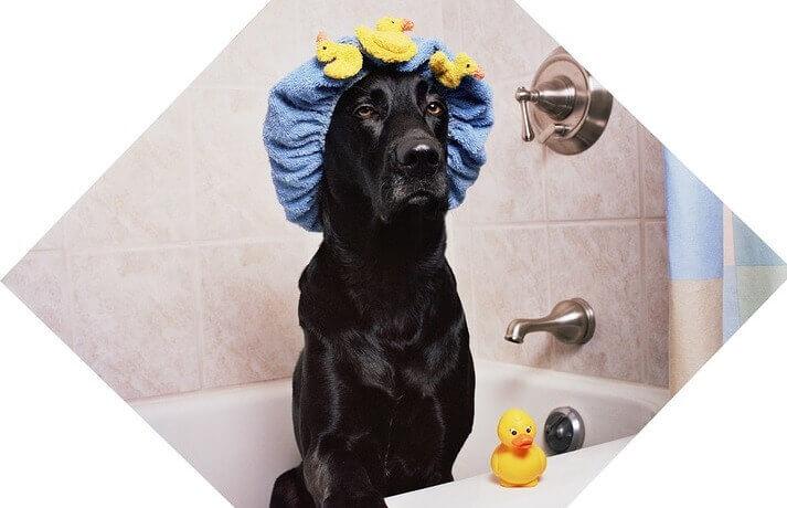 pasos para bañar a tu perro