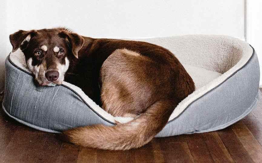 Perro en su cama