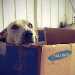 Cómo afectan las mudanzas a los perros