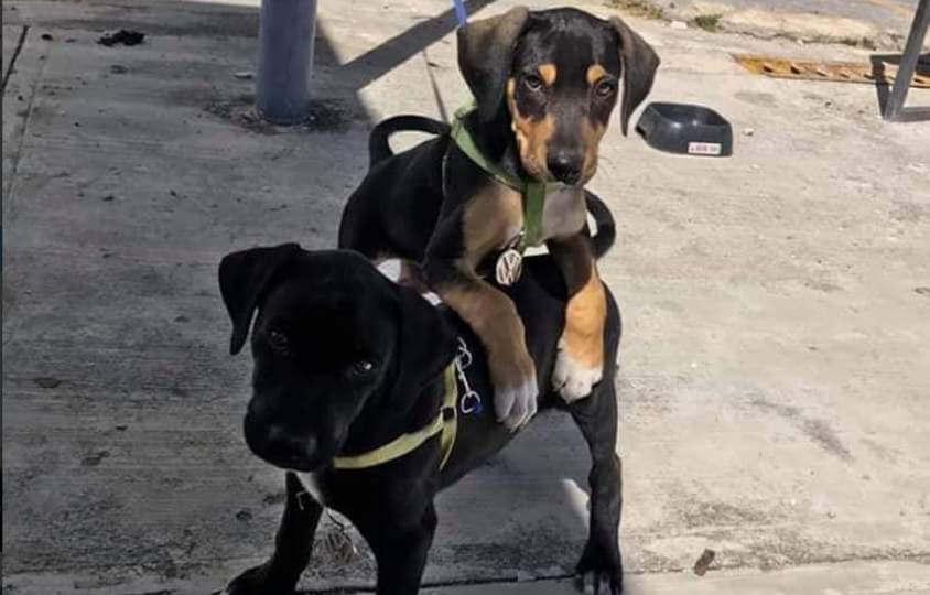 Los perros rescatados por la Volkswagen