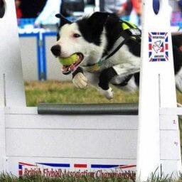 perro practica flyball