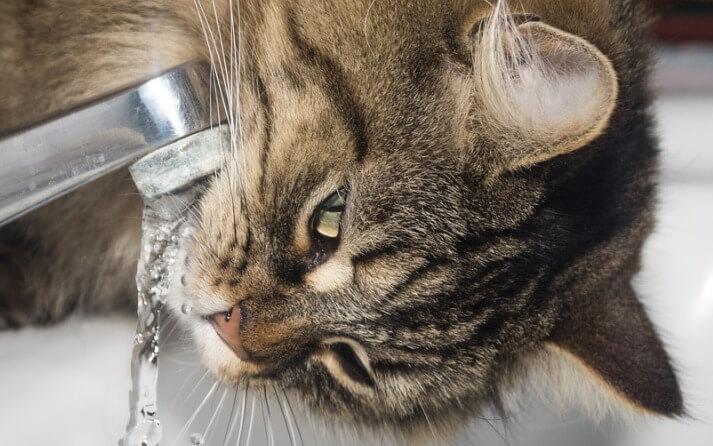Es necesario lavar a los gatos