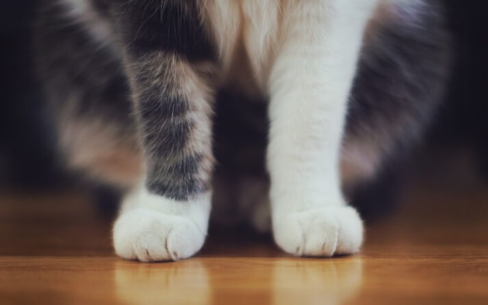 Consejos lavar gatos