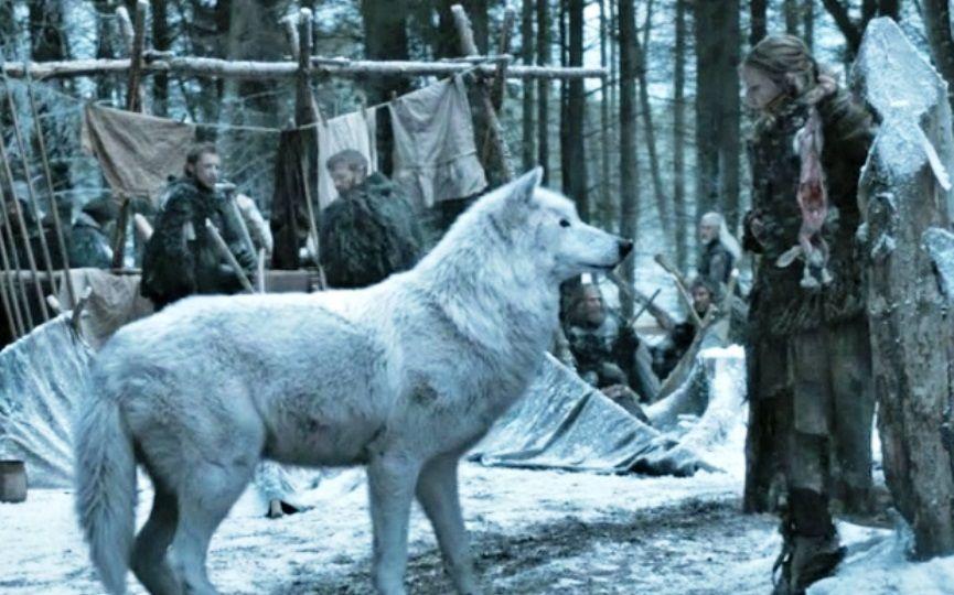 LOBO DE JUEGO DE TRONOS Fantasma que ha causado furor por algunas razas de perro entre los seguidores