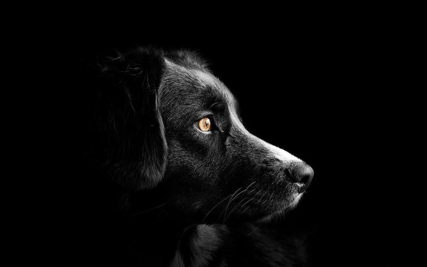 Nomes para Cães Macho e Fêmea