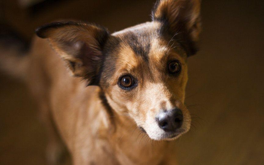 nomes para cães pequenos