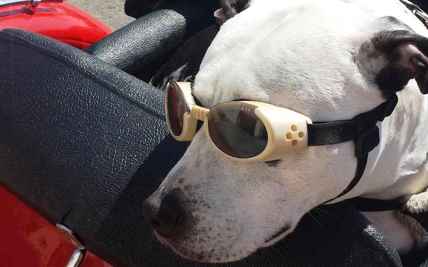 Ejemplo de gafas para perros