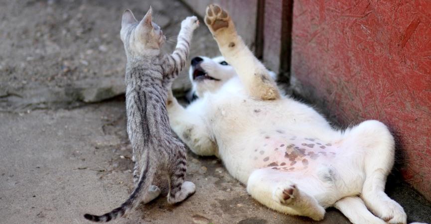 mascotas como este gato y este perro son las preferidas de muchos españoles