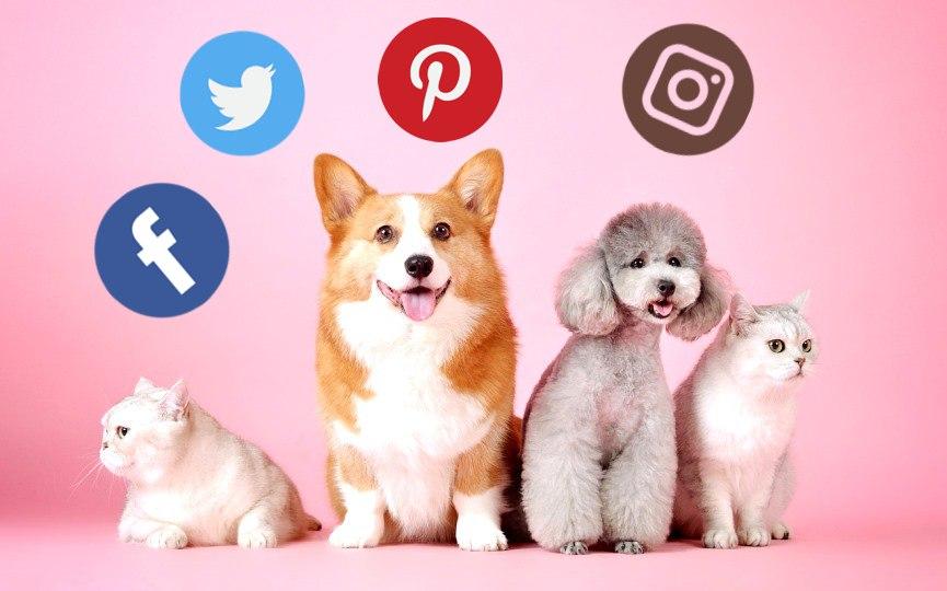 el peligro de la redes sociales para las mascotas