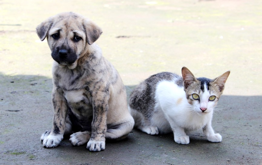 mascota que necesitan adopción