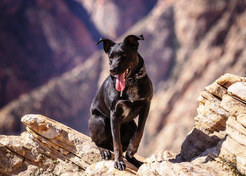 perro en acantilado