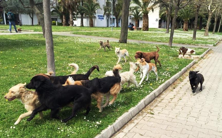 redes sociales jauría de perros en la calle