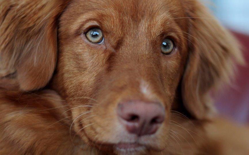 diabetes en alimentos dietéticos caninos