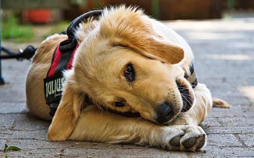 dieta en perros con epilepsia