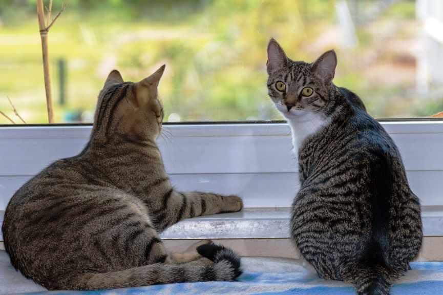 dos gatos conviven