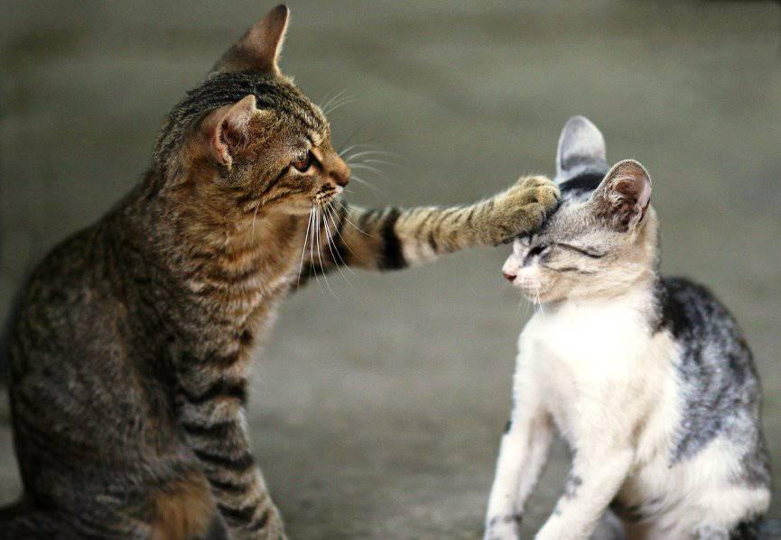 dos gatos se conocen