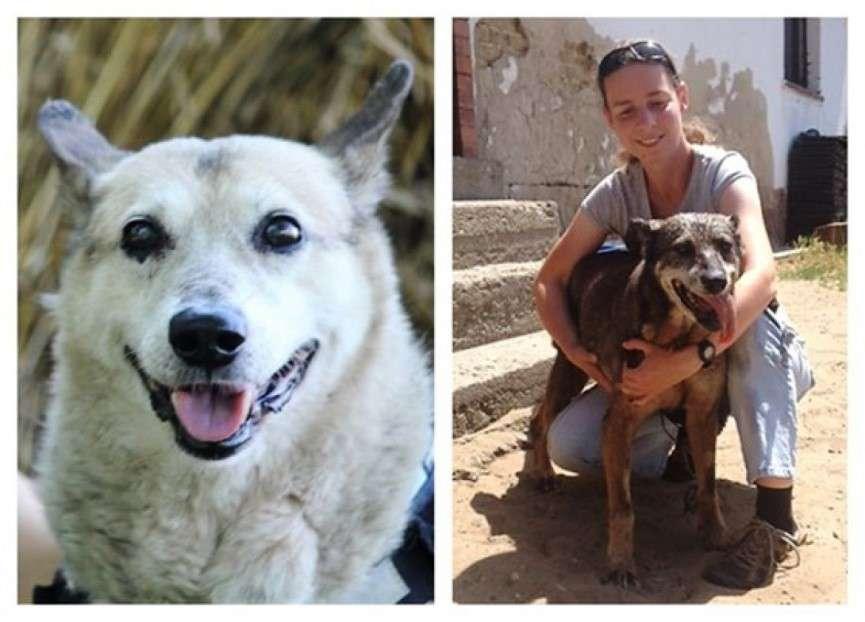 genes de perros de avanzada edad