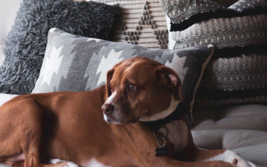 cómo reducir la ansiedad por separación en perros