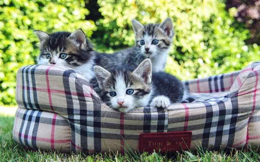 camas para gatos tamaño y forma
