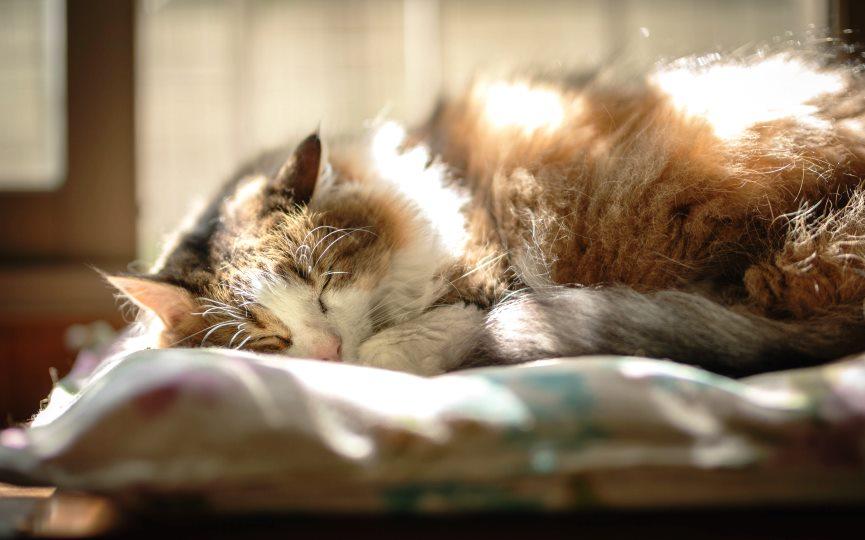 camas caseras para gatos