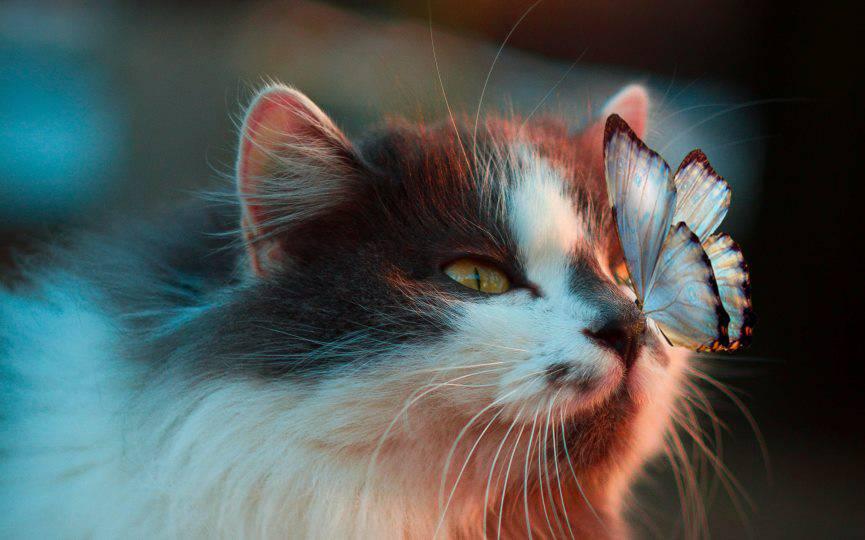 gato y mariposa