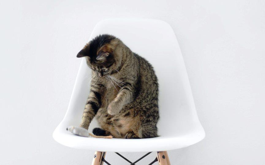 leishmaniosis en gatos