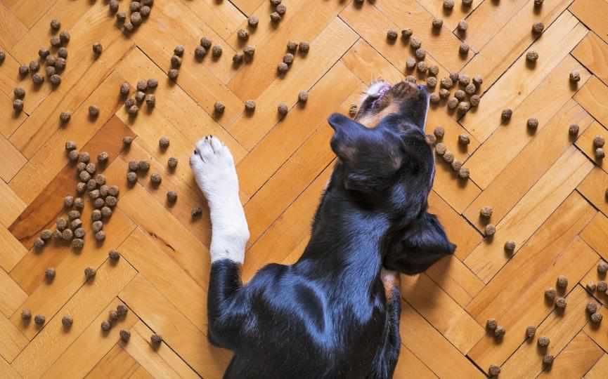 cardiomiopatía dilatada en perros y dieta con cereales