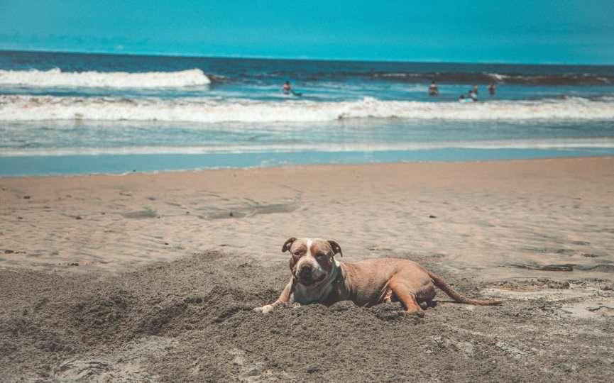 prevenir picadura de medusa en perros