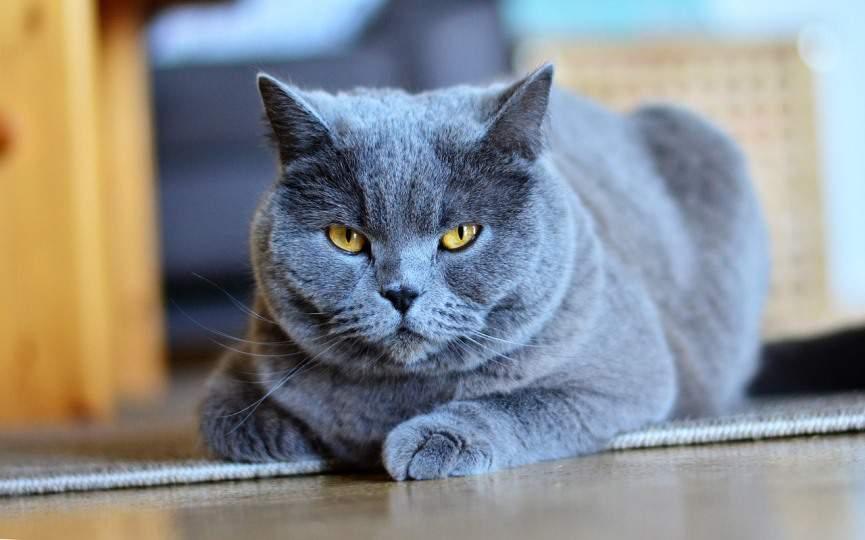 gatos temen la mirada fija