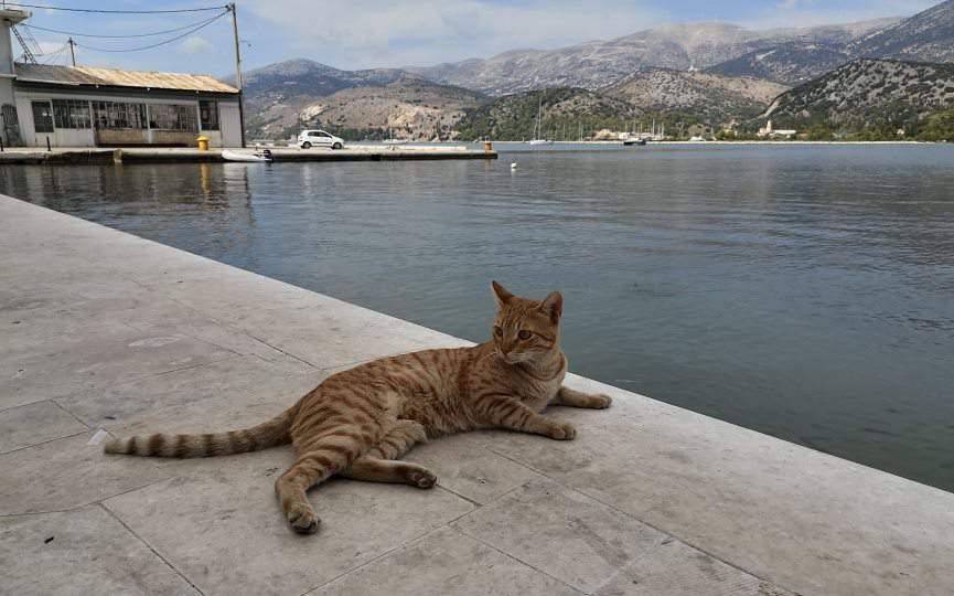 miedo al agua de los gatos