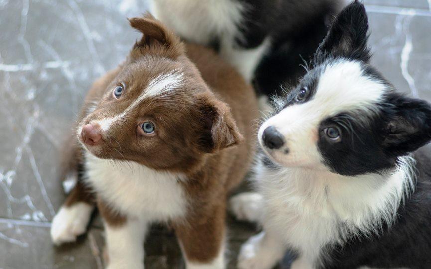 resistencia de perros a antimicrobianos
