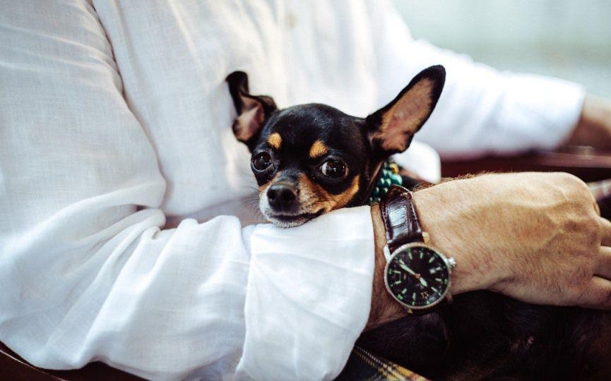 enfermedades de razas de perros pequeños