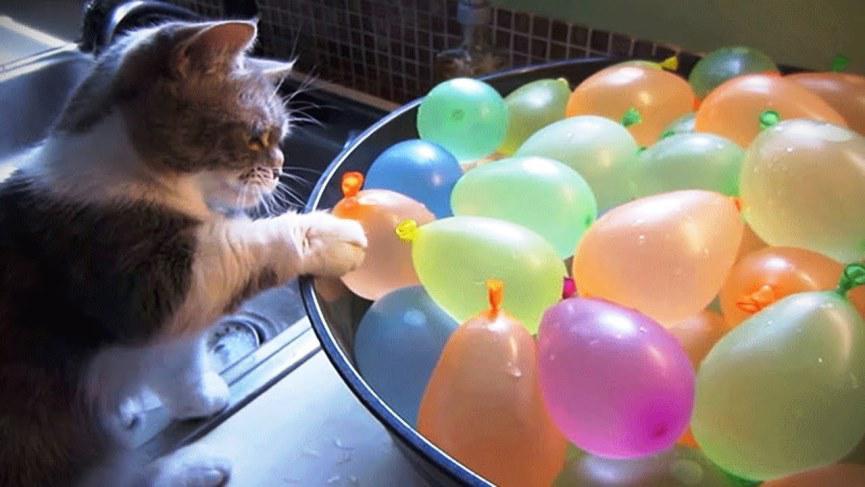 los gatos temen a los globos