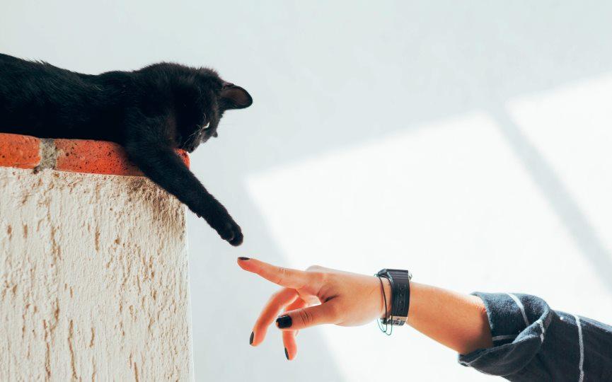 tipos de propietarios de gatos