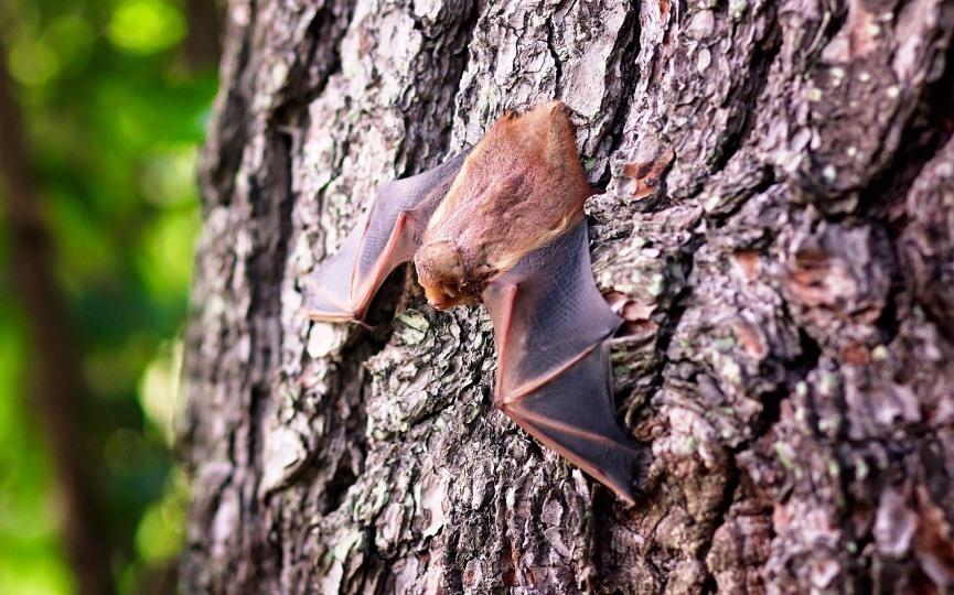 murciélago animal que provoca enfermedades